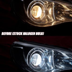 Valenti H1 Halogen Bulbs